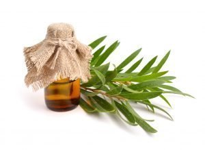 How to Treat Acne With Tea Tree Oil